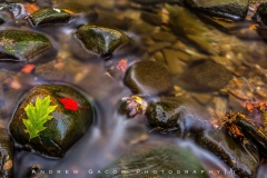 Leaves_Rocks_Brecksville_Fall