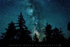 MIlky_Way_Trees_Pine