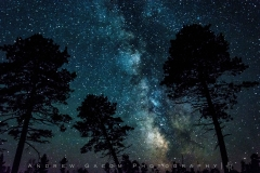 Milky_Way_Trees