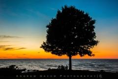 Rocky-River-Tree